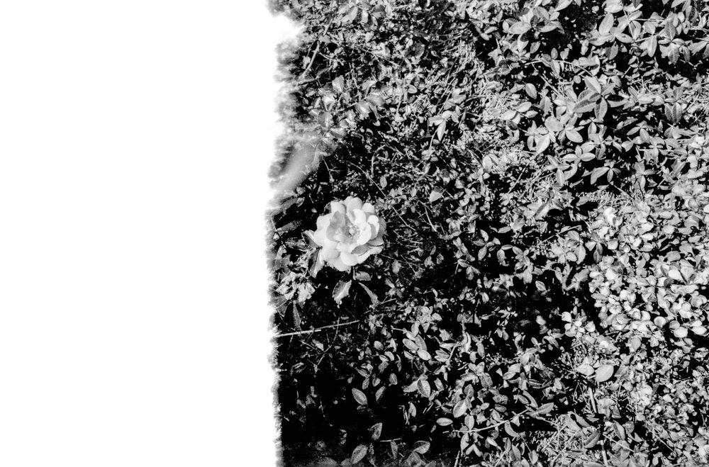 Film Scans-137.jpg