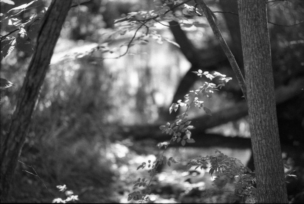 Film Scans-142.jpg