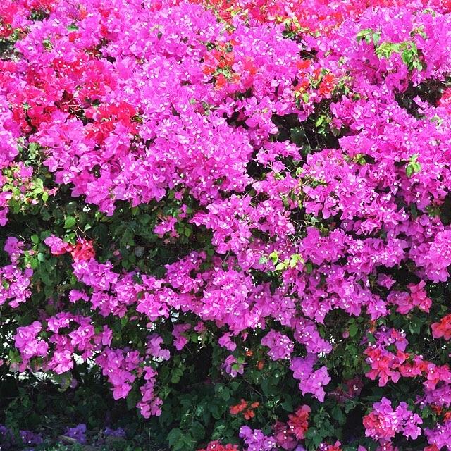 • spring has sprung •