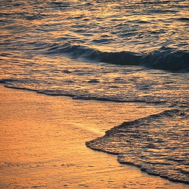 • shining shores •