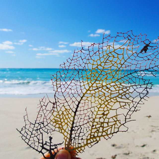 • sea fan at the sea shore •