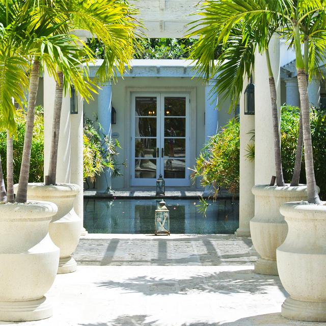 • palms paradise •
