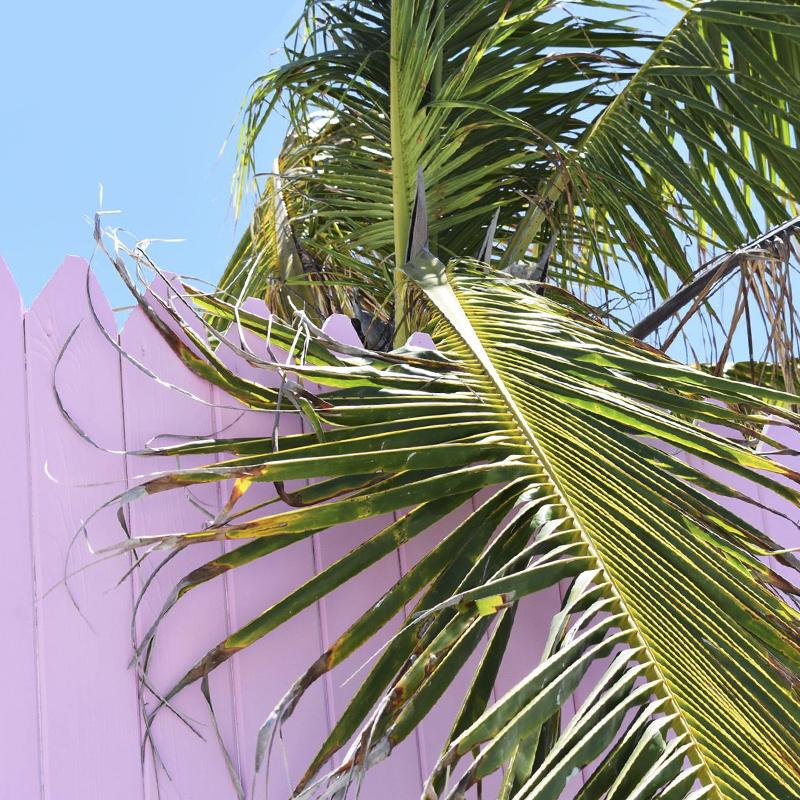 •plants on pink •