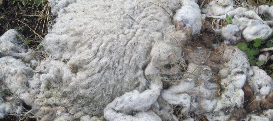 Dahlia blanket
