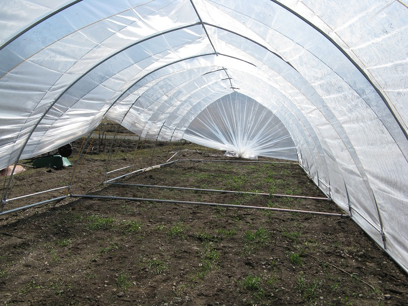 hoophouse interior