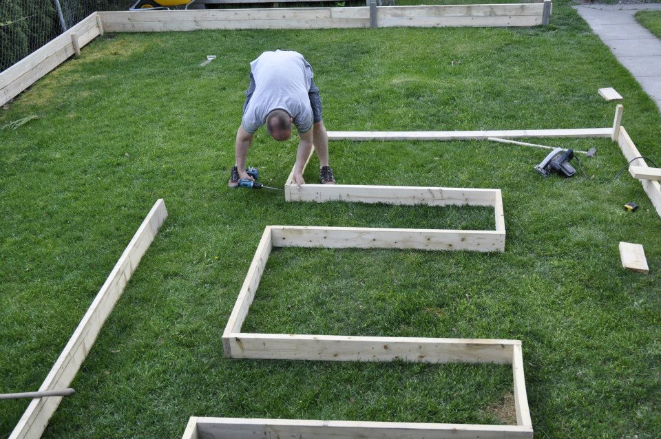 Norm lays out his garden frame--mostly 2x6's