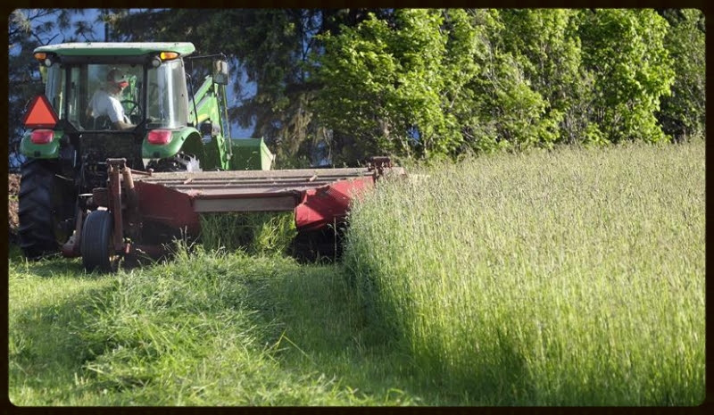 Joe, mowing the first hay crop.