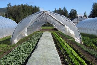 farm 135.jpg