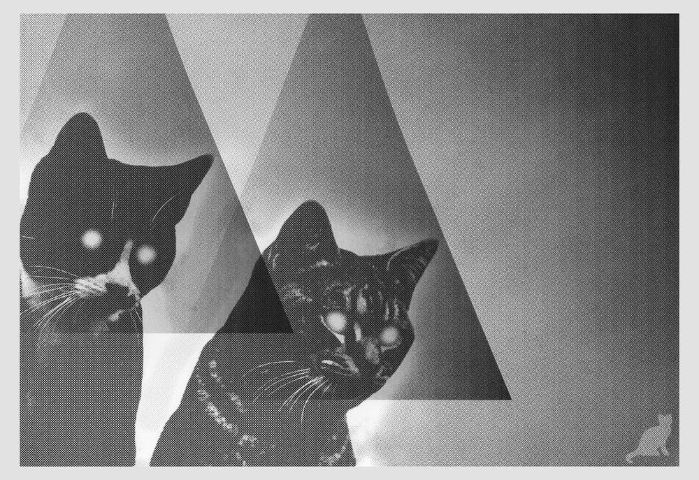 big-cats.jpg
