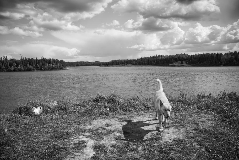 Un chien ère près de la rivière Waswanipi
