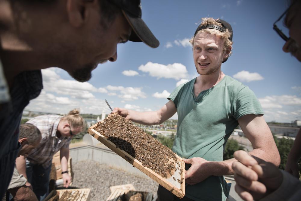 Declan Rankin, un autre cofondateur, est sur le toit de l'Accueil Bono, dans le Vieux-Montréal, où se trouvent, sur le toit de l'institution, 3 ruches. Ici, Alvéole a démarré un partenariat avec l'organisme venant en aide aux sans-abri en installant à rabais des ruches, afin d'enseigner aux bénéficiaires comment prendre soin des abeilles. Les responsables de l'accueil affirment qu'environ une dizaine de personnes qui fréquentent l'établissement s'impliquent dans le programme d' apiculture et qu'ils en retirent une satisfaction qu'ils ne trouvent pas ailleurs. En effet, avoir des dizaines de milliers de petits individus ailés sous sa responsabilité n'est pas une tâche qu'on prend à la légère, et ceux qui s'impliquent sur le toit de l'accueil semblent prendre la tâche très au sérieux.