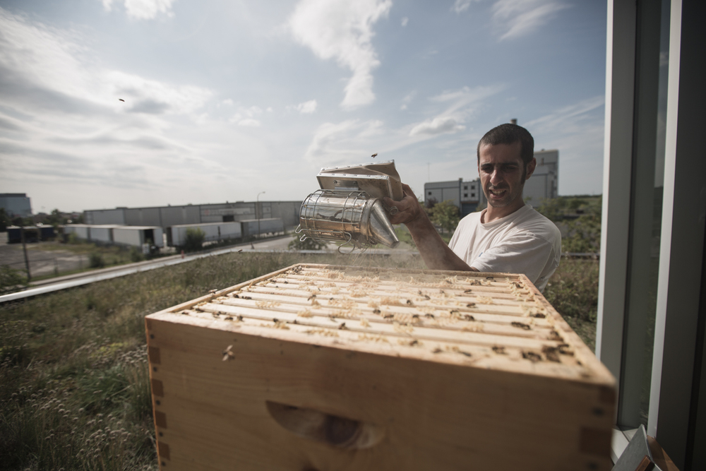 Michael, un apiculteur d'expérience maintenant à l'emploi de Miel Montréal, enfume légèrement la ruche, afin de calmer les abeilles avant de procéder à l'inspection des cadres.