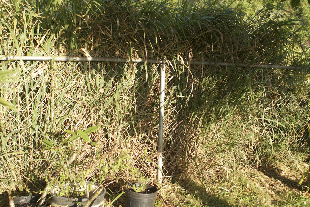 8 foot Section of over grown fence line.