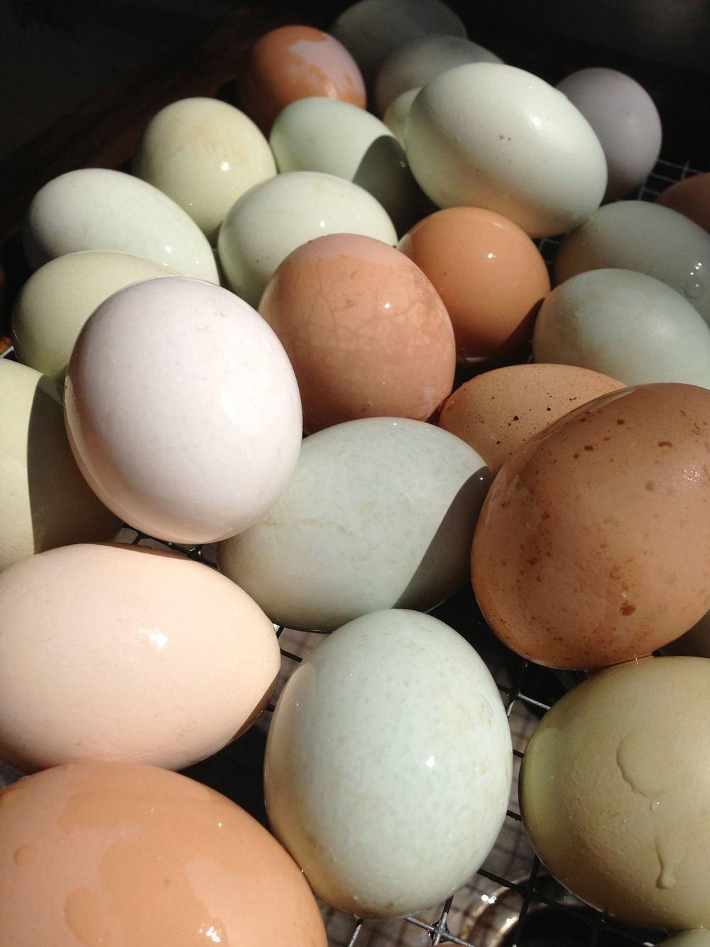 fresh-eggs.jpg