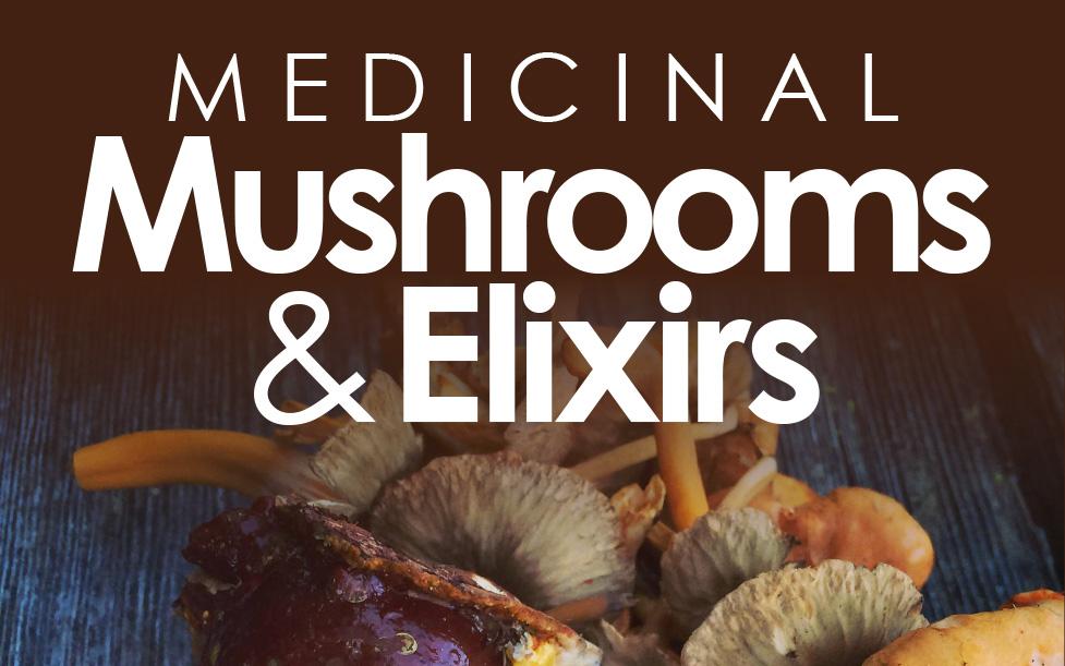 TALK @ Nanaimo: Medicinal Mushrooms & Elixirs