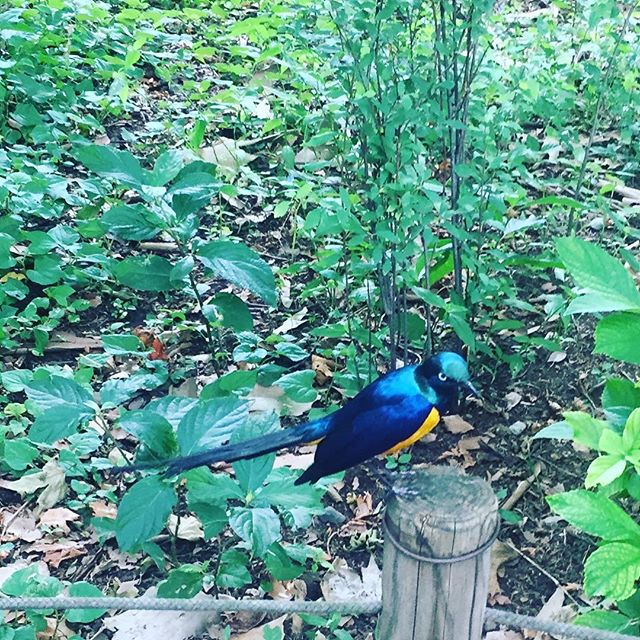 neojapon.com #bird #park #beautiful #neojapon #japan #tokyo #japon