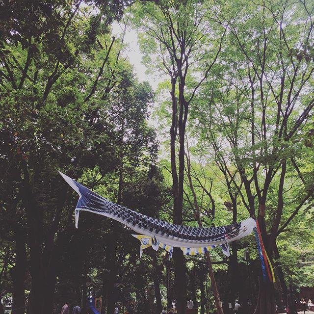 #koinobori #neojapon #tokyo #japan neojapon.com