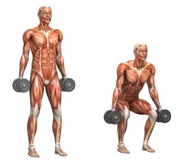 Muscular System - Squat.jpg