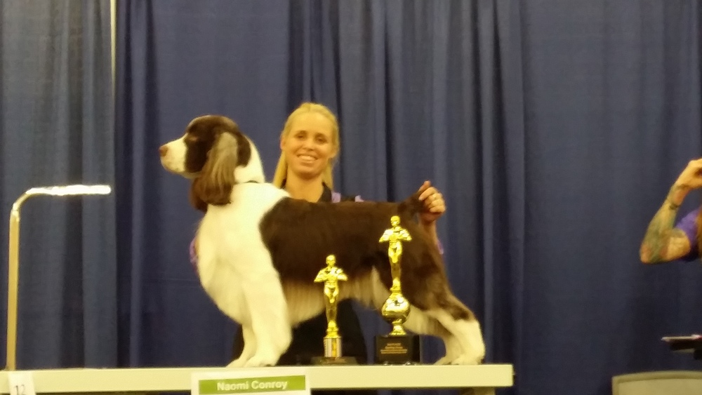 Naomi wins the Sporting Breed class at the Groom & kennel expo in California (Feb 2014)
