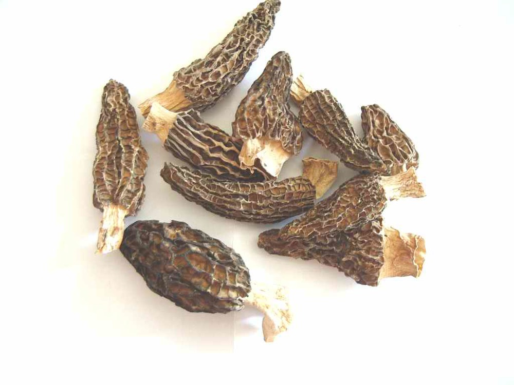 dried morels.jpg