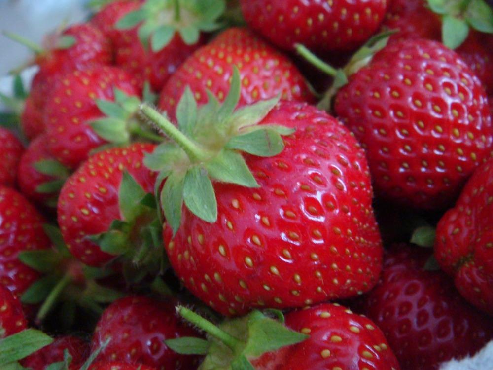 08 strawberry.jpg