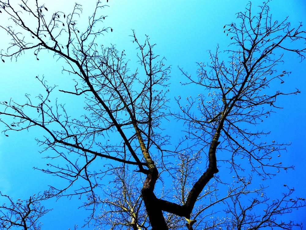nature (7).JPG