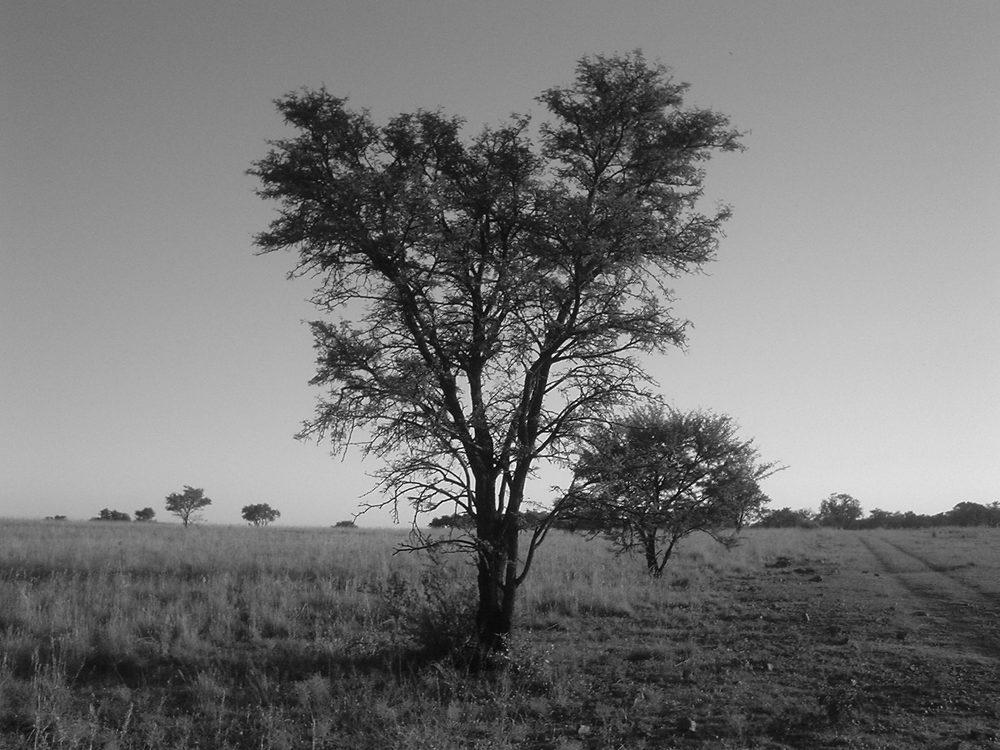 nature sk kayss bw (3).jpg