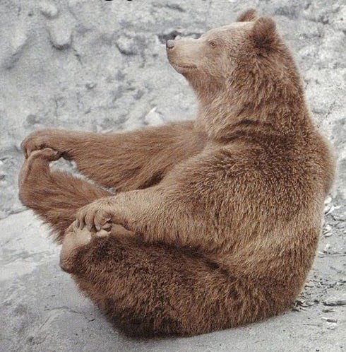 meditation bear copy.jpg