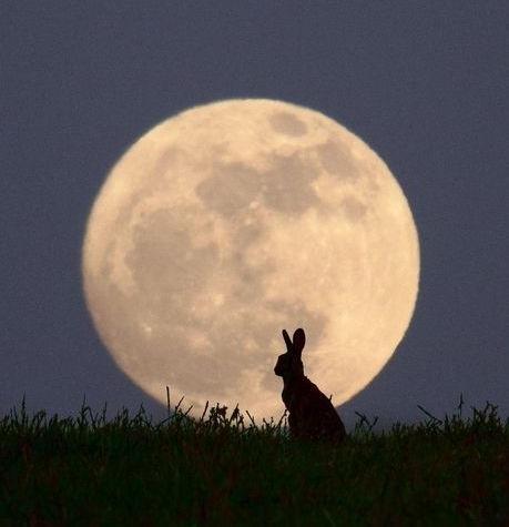 Es gibt Nächte, wo die Wölfe ruhig sind und nur der Mond heult. George Carlin
