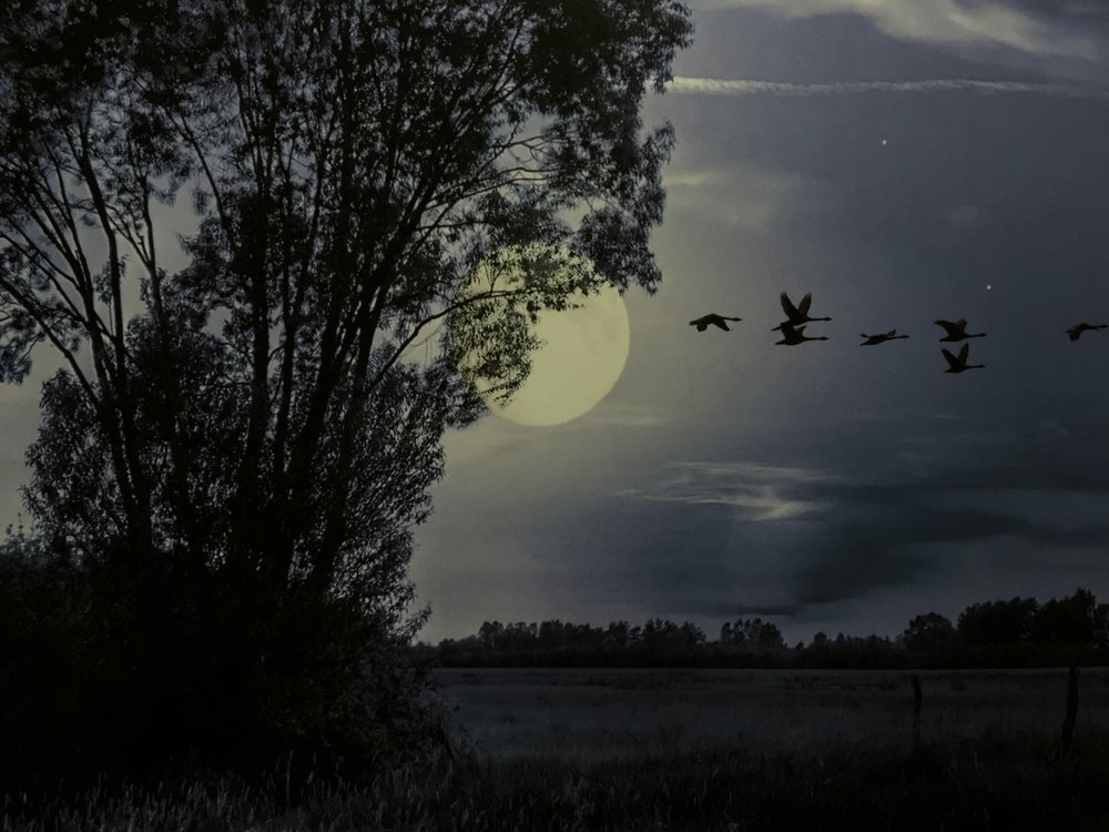 Im Schatten des Mondes,tanzte sie im Sternenlicht     ein schwermutiges Lied,für die Nacht flüsternd.  Blackmore's Night .