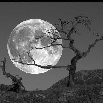 """""""Mondlicht überflutet alles, nur nicht die hellsten Sterne.""""J.R.R. Tolkien, The Lord of the Rings"""