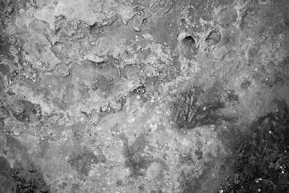 Mars in Cancer.jpg