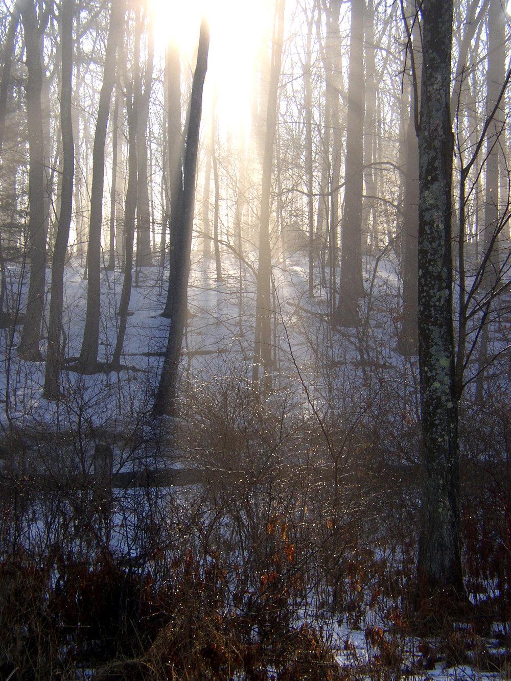 sunlight print.jpg