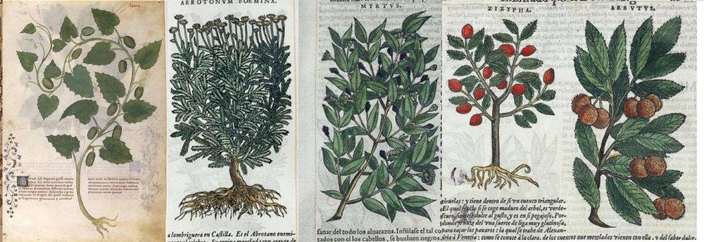 5 blog plants2.jpg