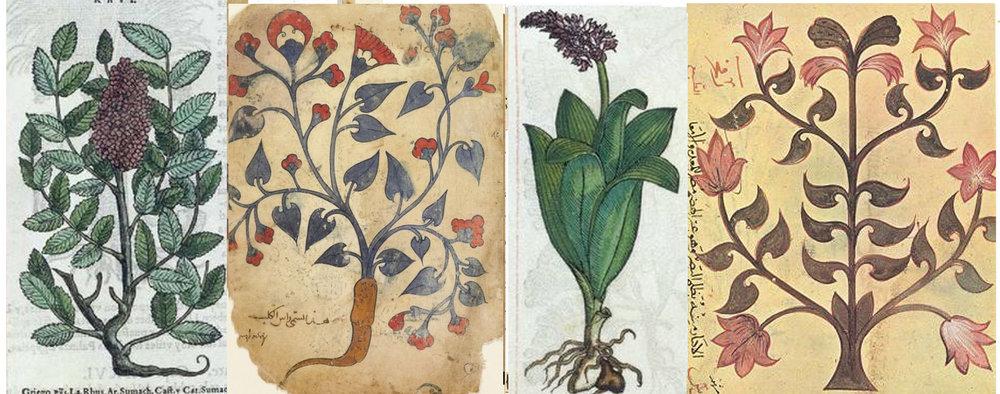 6 blog plants 1.jpg