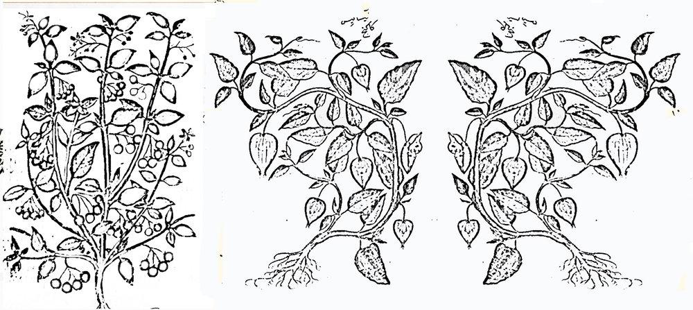 9 blog plants 4.jpg