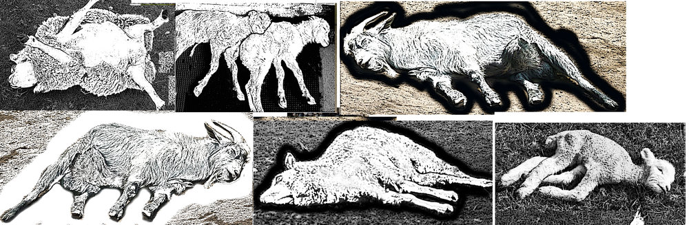 8 dead animals b.jpg