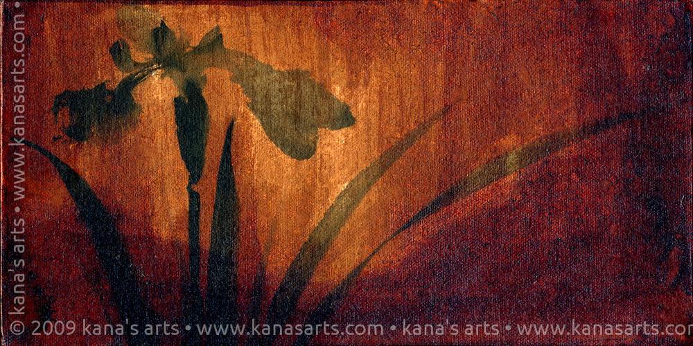 kakishibu iris