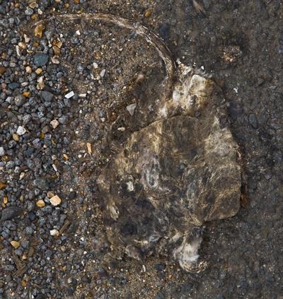 DEAD-RAT-PHOTO-ZANGMOALEXANDER.jpg
