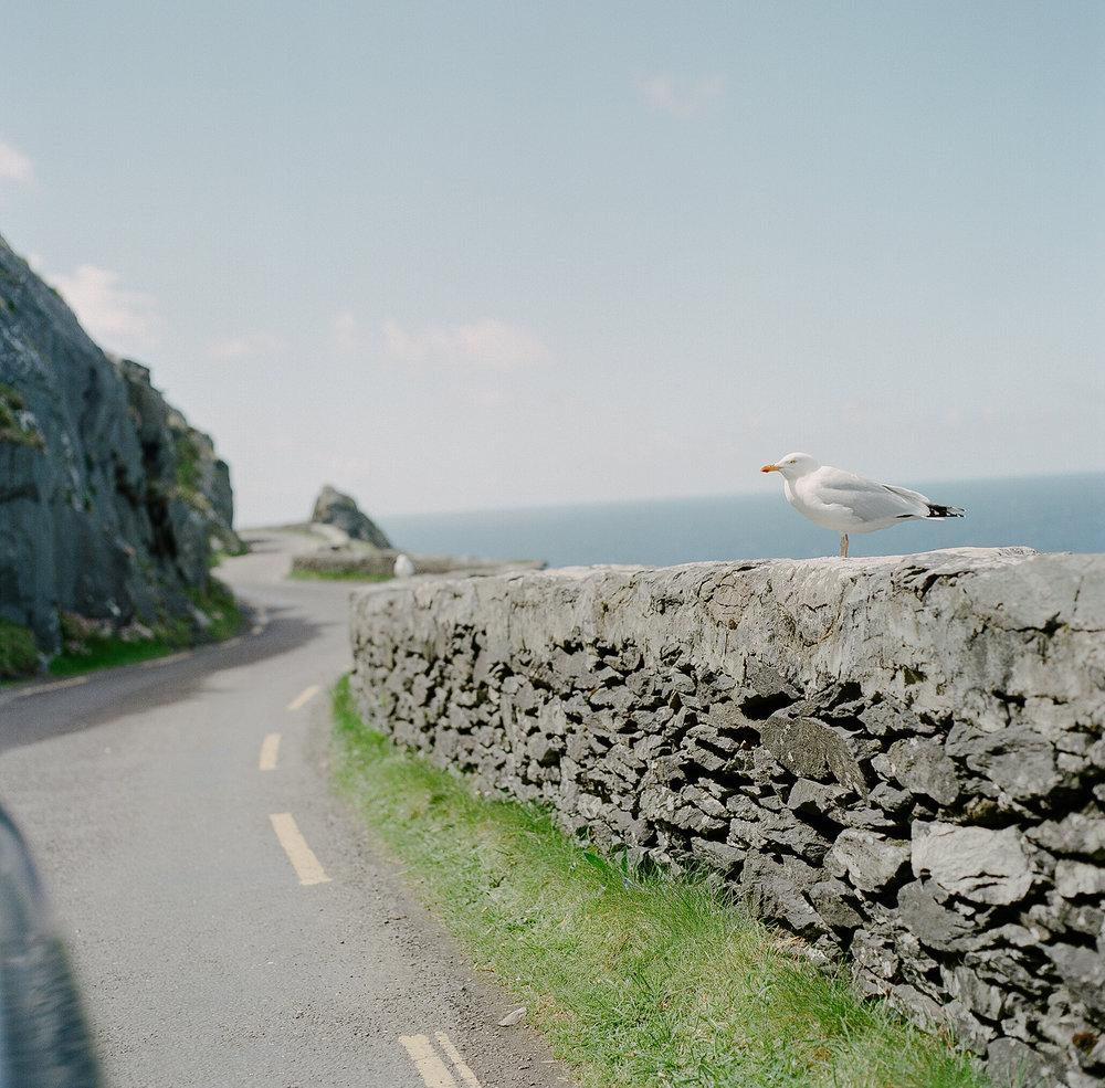Ireland on Film (Katherine Jury) 103.JPG