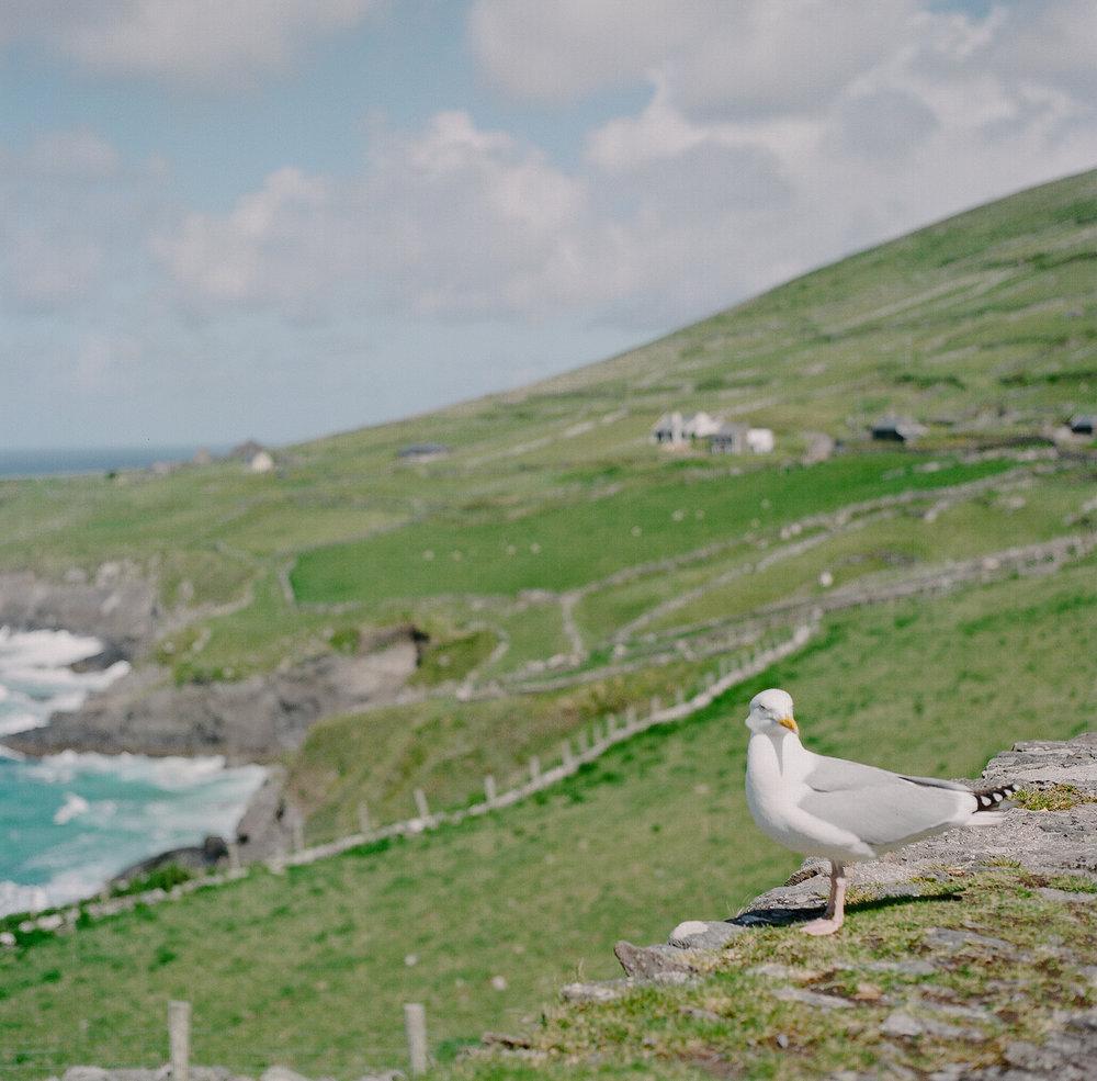 Ireland on Film (Katherine Jury) 110.JPG
