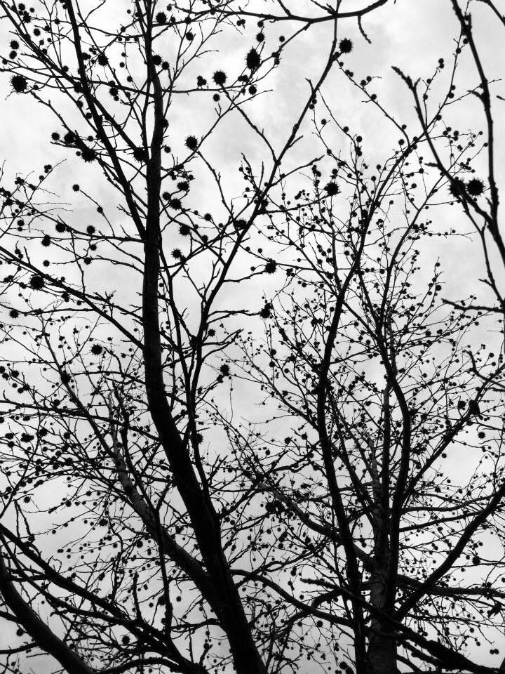 Random Tree.JPG
