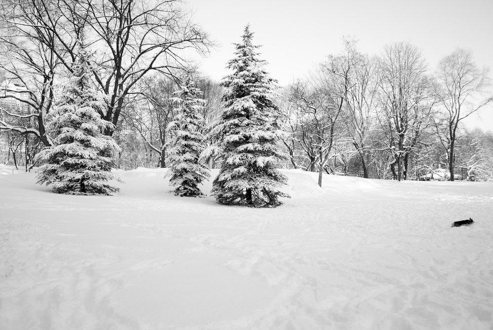 Central Park_1 2010.JPG