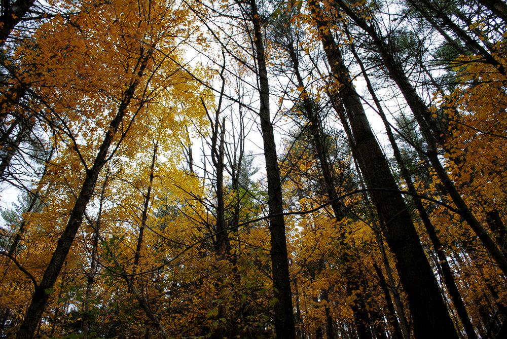 Vermont 2010.JPG
