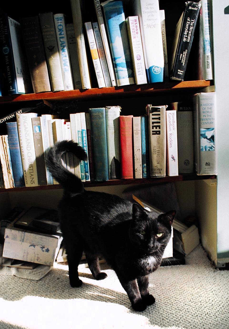 cat_film