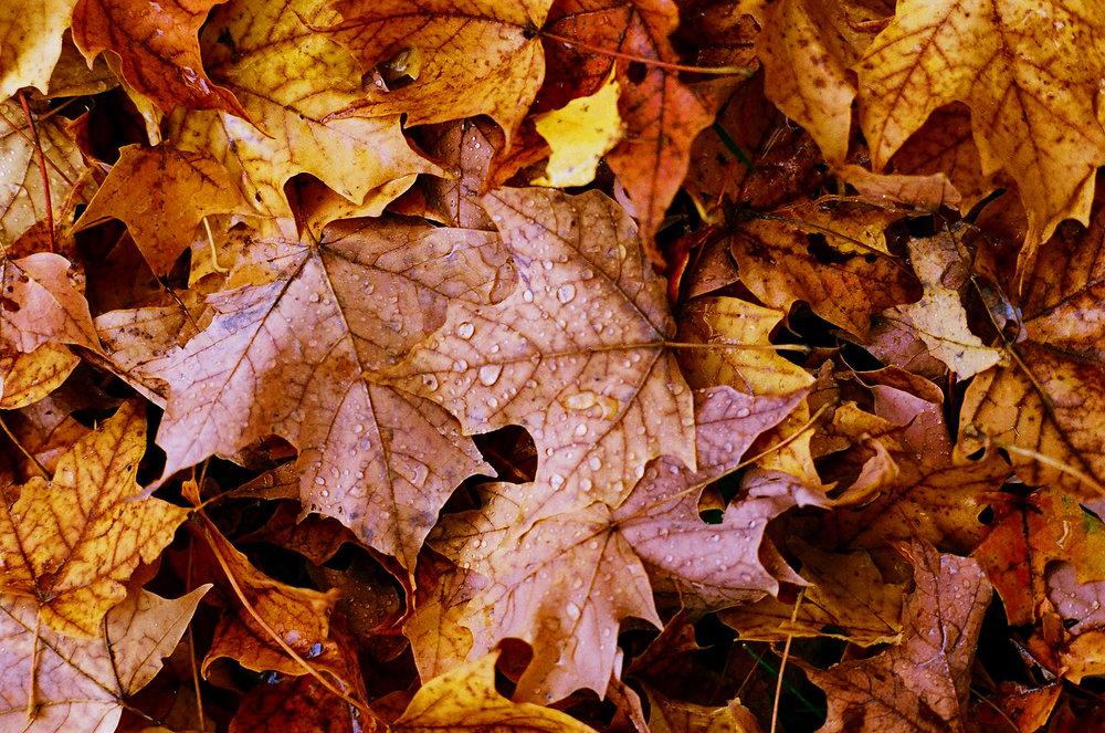 fall_film