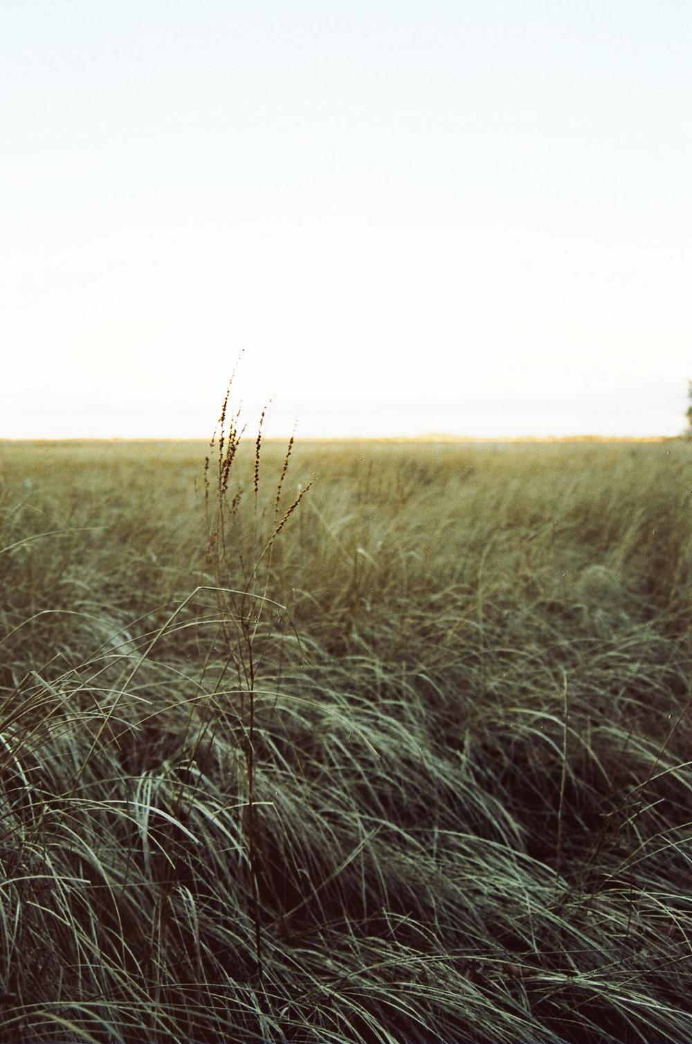 marsh_film