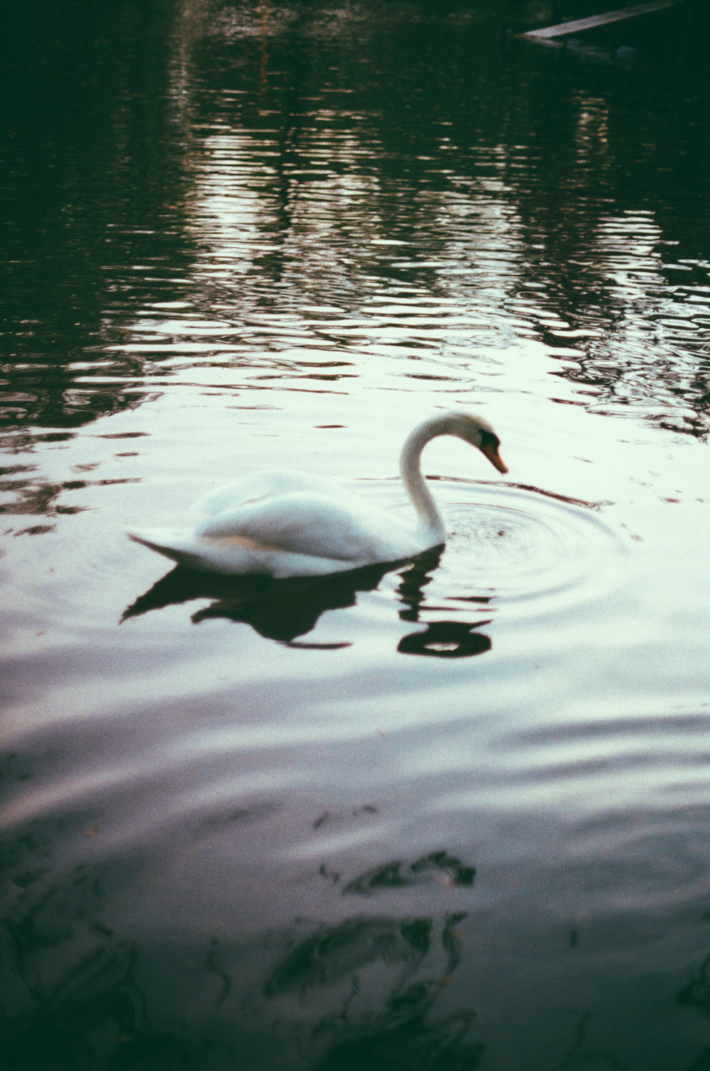 swan_boston_common_film_photographer