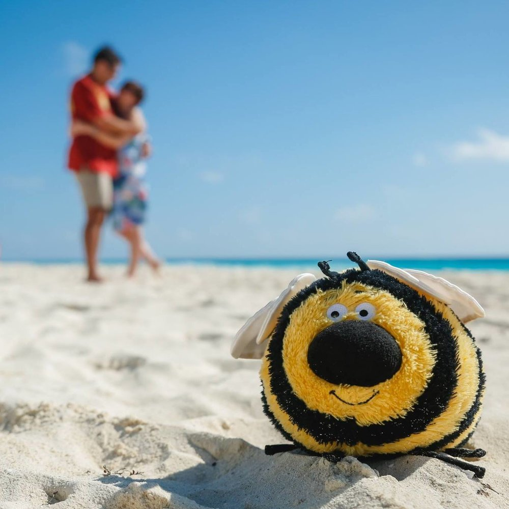 Busby The Bee | @busbythebee