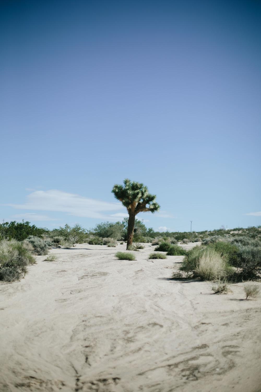 THE ETERNAL CHILD : JOSHUA TREE // MIDCENTURY PREFAB HOMESTEADER CABIN || Photography by Valerie Noell
